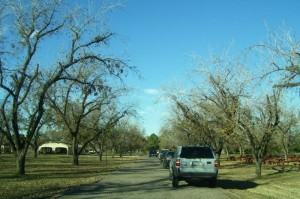 Pecan Grove at the Farm at South Mountain