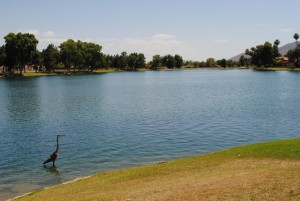 Crane at Lake Margherite in McCormick Ranch