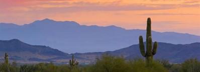 The Phoenix Mountain Preserve